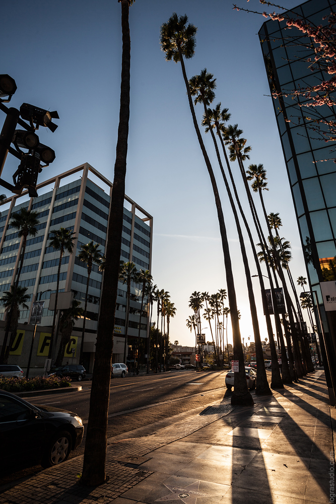 Palms on Hollywood boulevard, Los Angeles, California